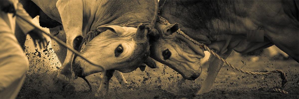 Bullfighting by O. Al Zubaidi.